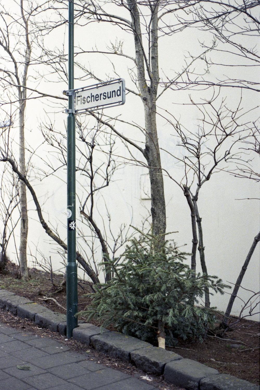 tree012.jpg