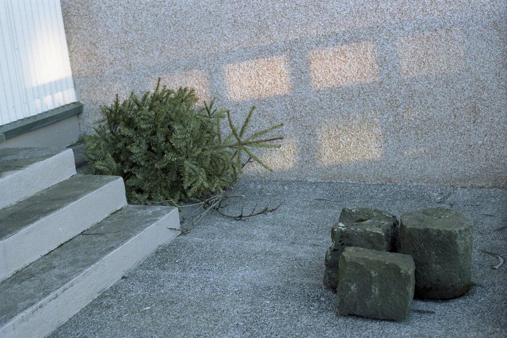 tree035.jpg