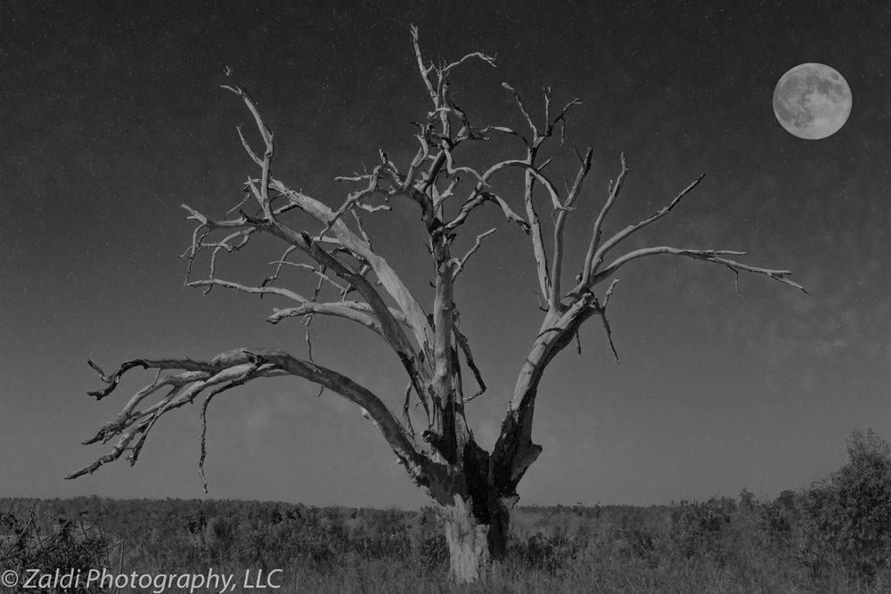 SC_Tree_Moon.jpg