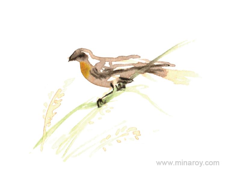 MinaRoy_Paintedbird_RGB_026.png