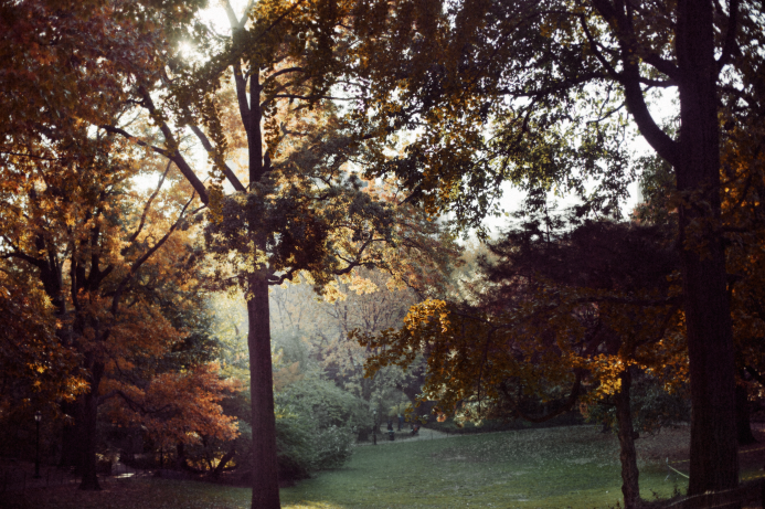 New York Fall, 2011.   Hot Cider. The trees, the leaves. Central Park. A new project coming soon.