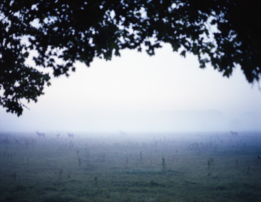Horses in mist, two of my favorite things together. Shot in Sweden after Midsummer. Contact sheet scan, so all blurry, will share more in the future.