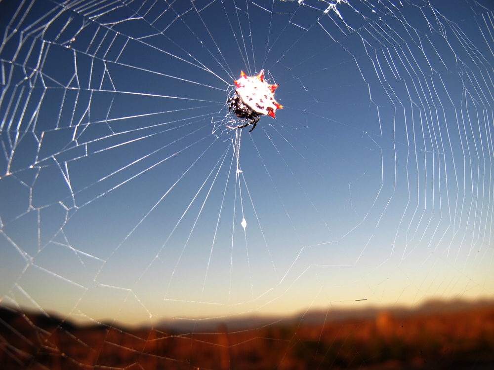 spider and web.jpg