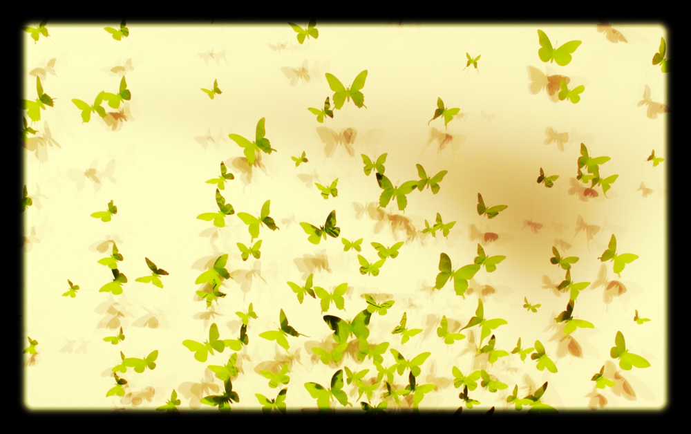 green butterflies.jpg
