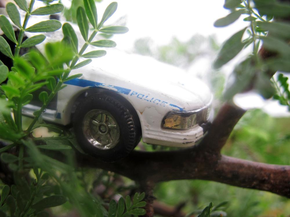 police tree.jpg