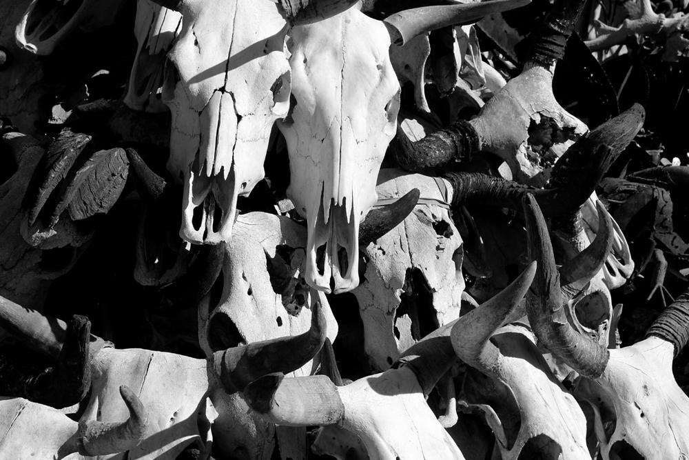 skullsbw.jpg