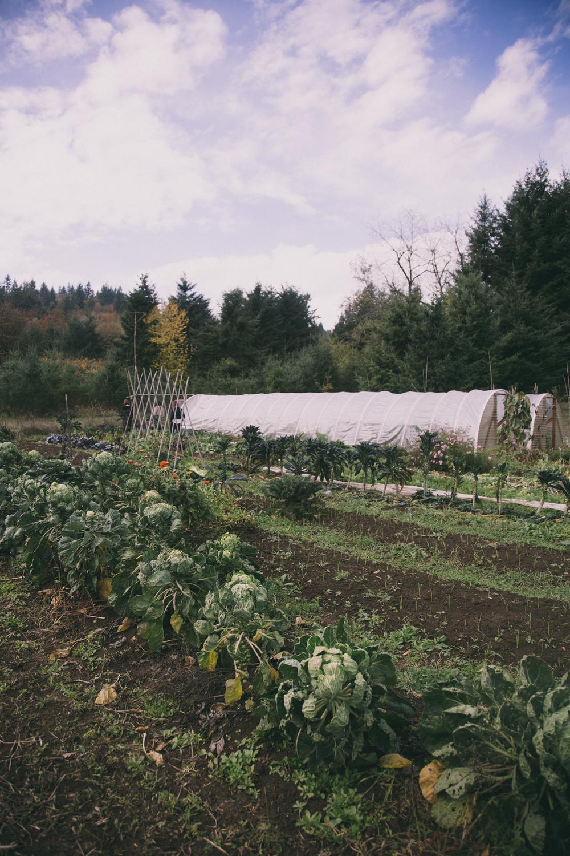 bonus farm shot.JPG