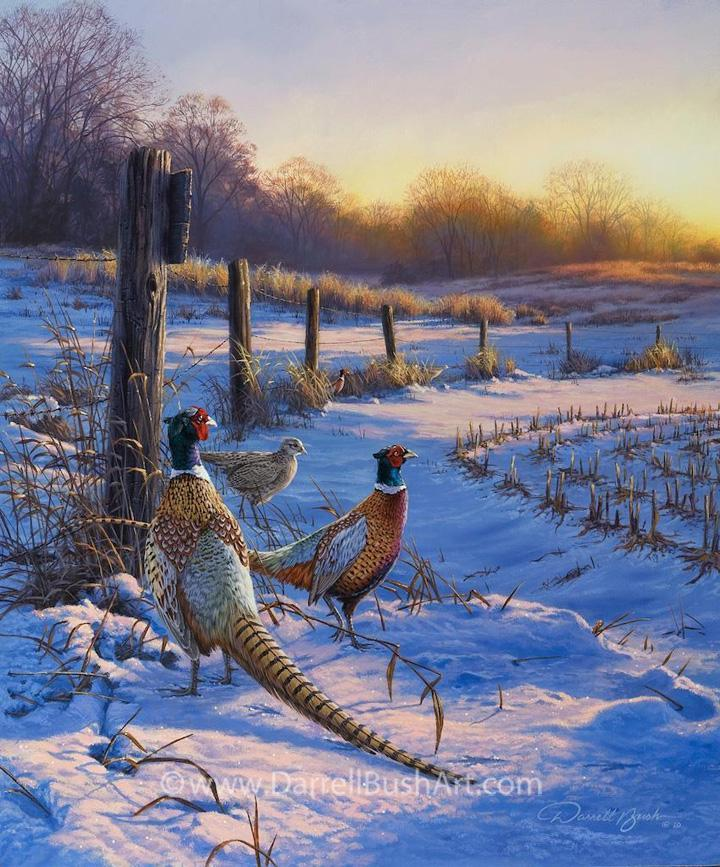 """Fence Line Pheasant"""