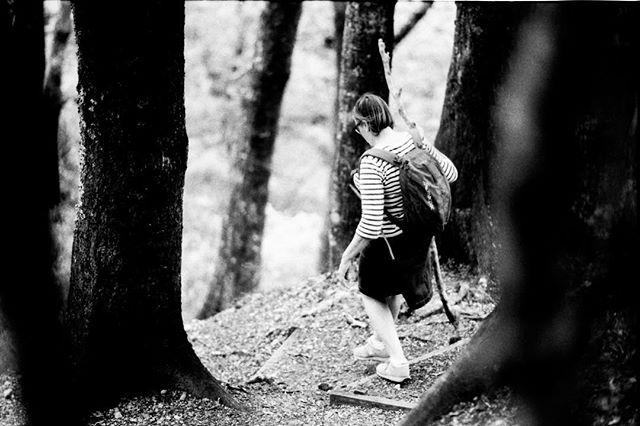 #kaitoke #nikonfe2 #illfordhp5 #35mmfilmphotography #monochrome #wellington #nikkor50f12