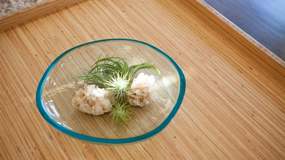 table-with-airplants.jpg