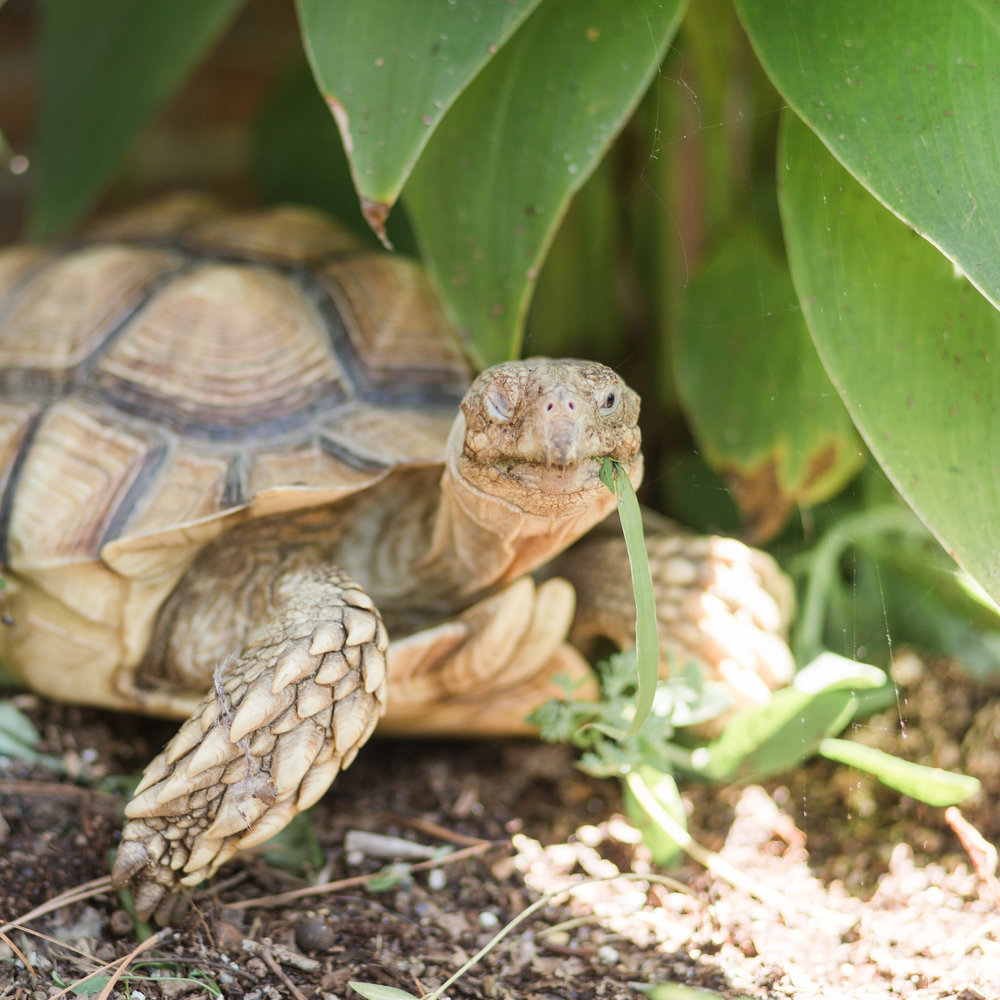 frank the tortoise the married couple pets