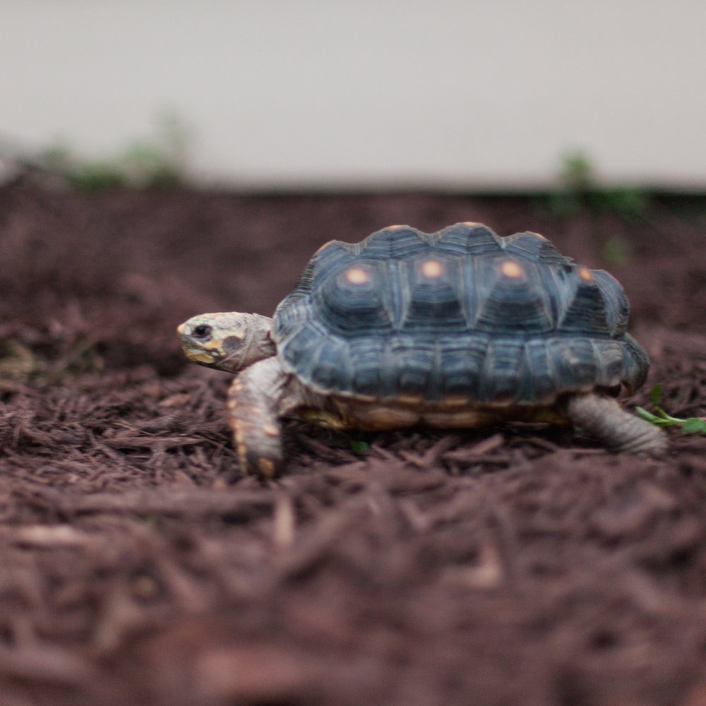 morty the torty the married couple pets