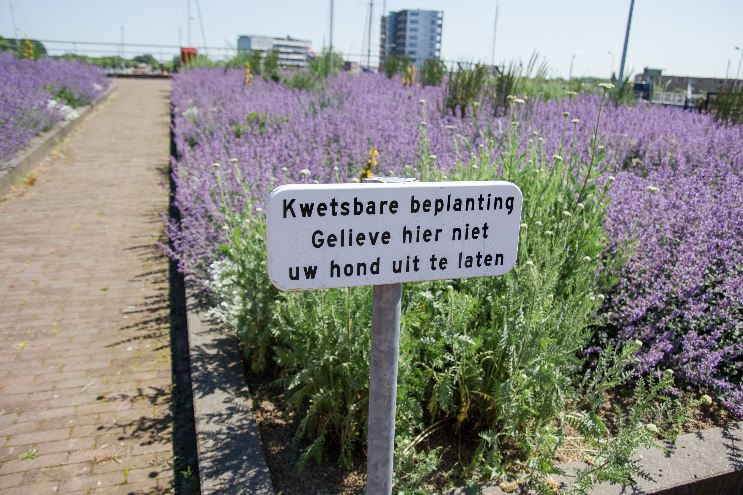 Dutch is a comical language at face value. Gefeliciteerd! Also, beplanting... bee planting.