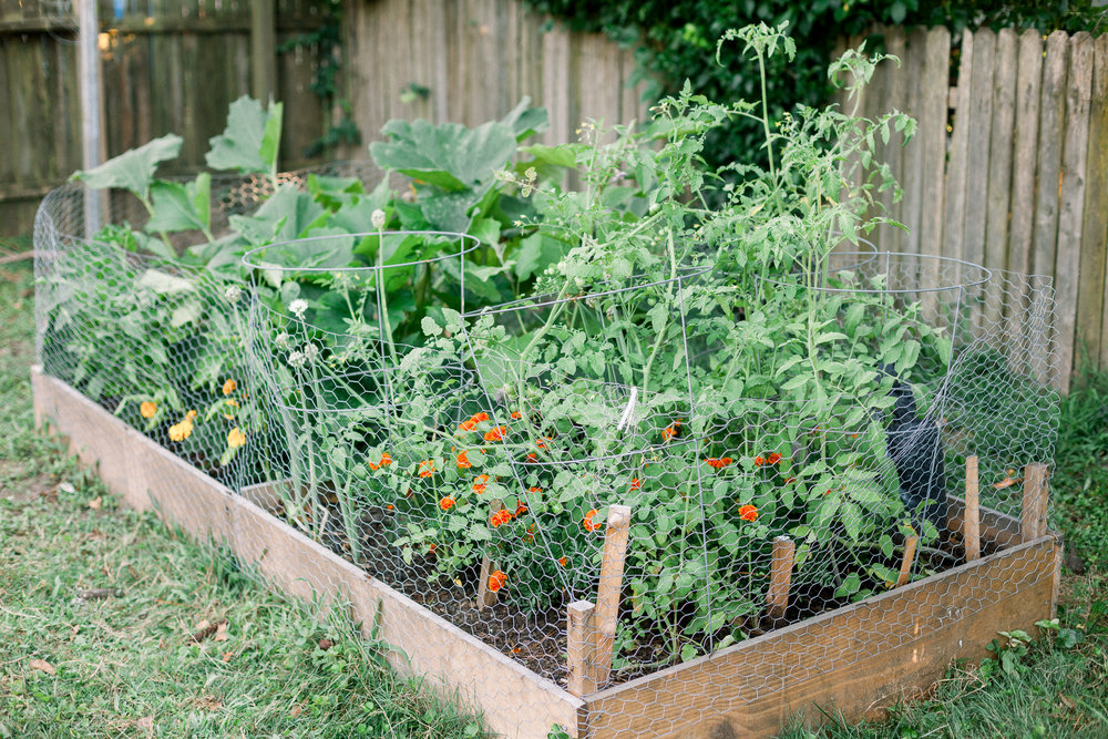 Square foot gardening attempt
