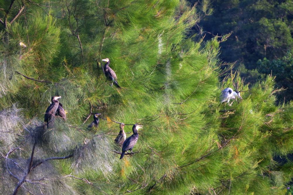 永續生態島低碳保育