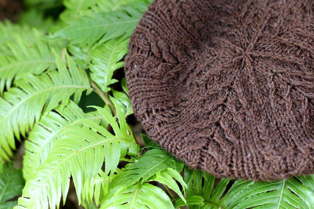 Ferns with ferns.jpg