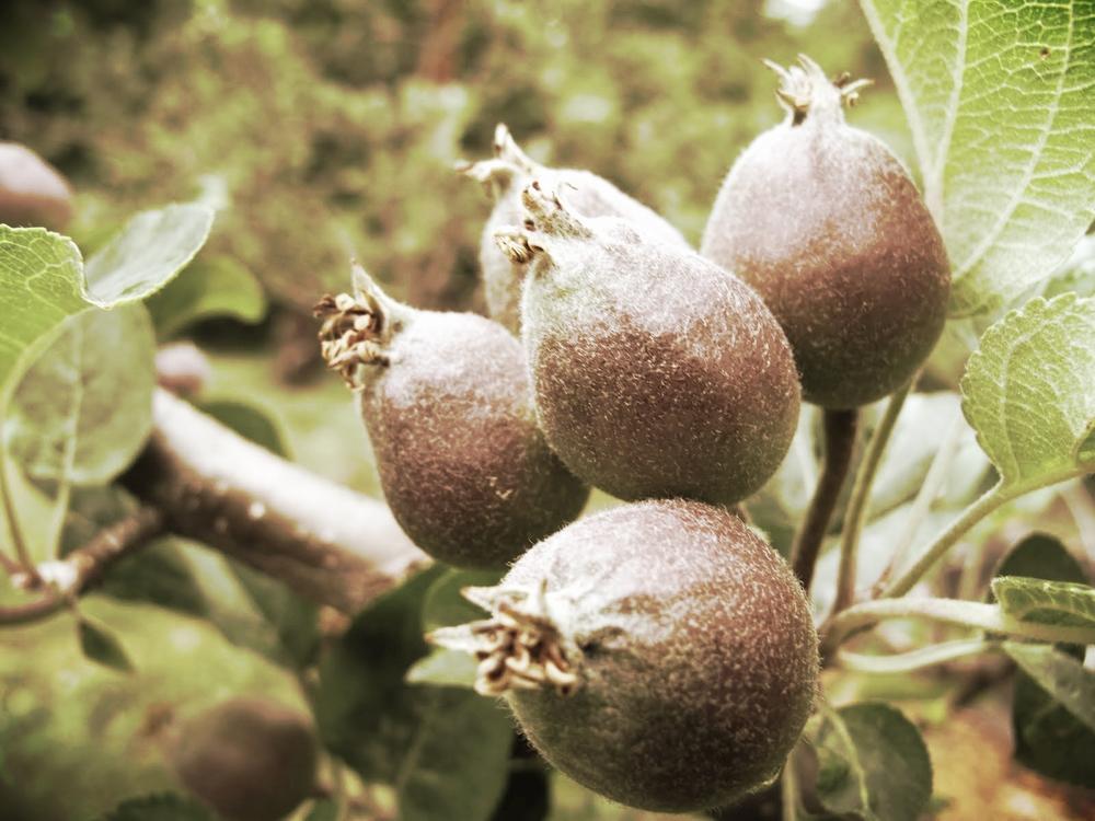 Summer Fruit Care