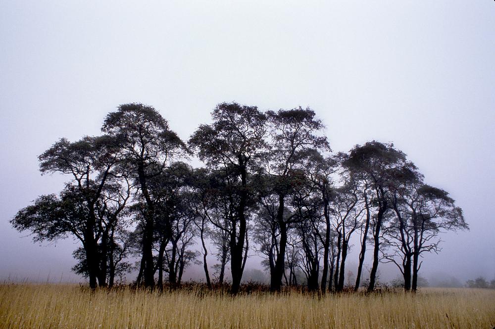 Landscape-15.jpg