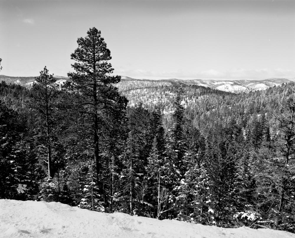 PinesBryce.jpg