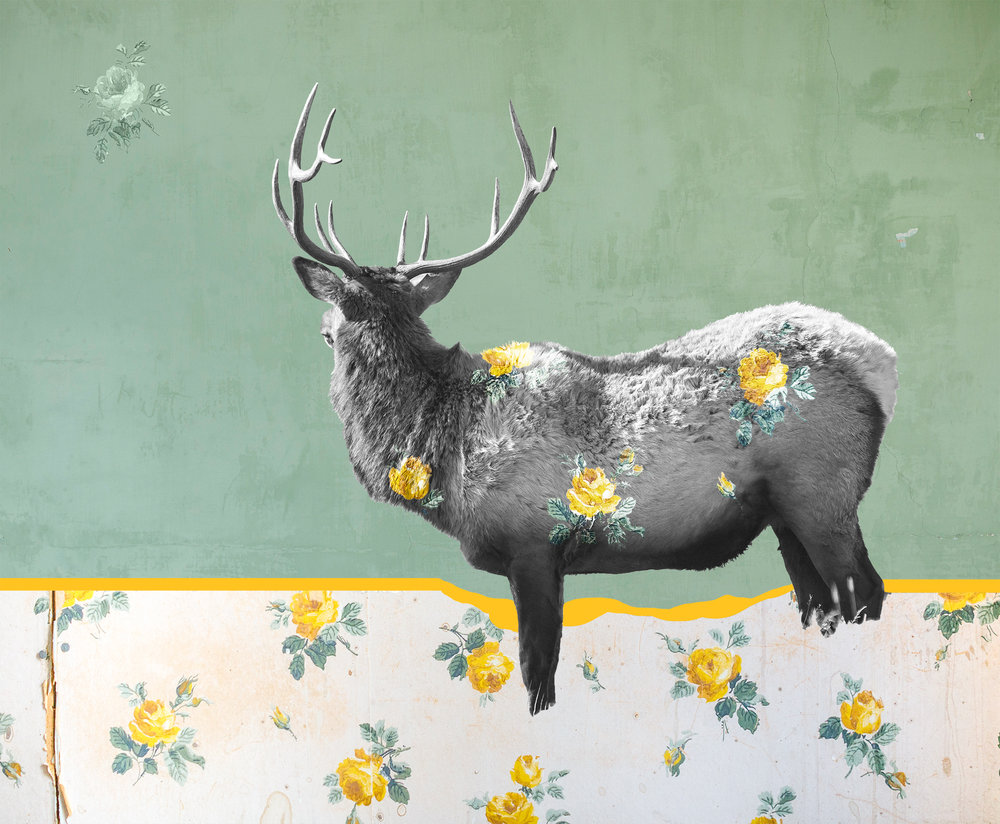 Pictured is a bull elk in Yellowstone National Park. The pattern is from an abandoned home in the ghost town of Bannack, Montana. The solid colored background are the painted walls of the abandoned Hotel Meade, also in Bannack, which was founded in 1862 after gold was discovered along Grasshopper Creek. The town was the first Capitol of the Montana Territory.