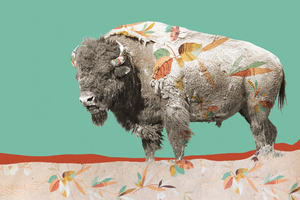 { Bison No. 2  } Pictured is a bison I photographed at the National Bison Range in western Montana. The pattern is a photograph I made of vintage wallpaper in an abandoned home in the ghost town of Bannack, Montana. The Roe/Graves House was built in 1866 and in addition to living there, William Roe operated a general store and meat market from the home. Roe was one of the Vigilantes who captured and hung the crooked Sheriff Henry Plummer and members of his secret gang, known as Road Agents, in 1864. The solid colored background is the painted walls of the abandoned Hotel Meade, also in Bannack, which was founded in 1862 after gold was discovered there.