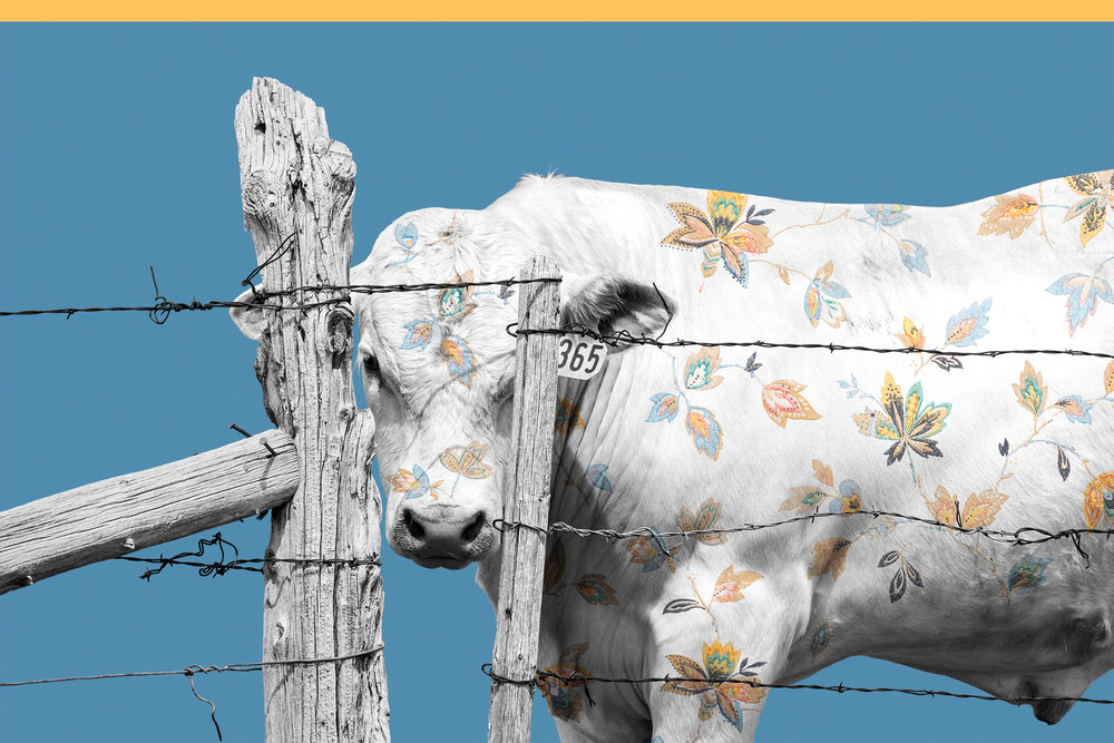 { Calf No. 2 }  pictured is a calf from a Montana ranch. The floral pattern is a photograph of vintage wallpaper from the Kramer Dress Shop, built in 1863,in the town of Virginia City, Montana. Virginia City is a National Historic Landmark and began in 1863 when gold was discovered in Alder Gulch.