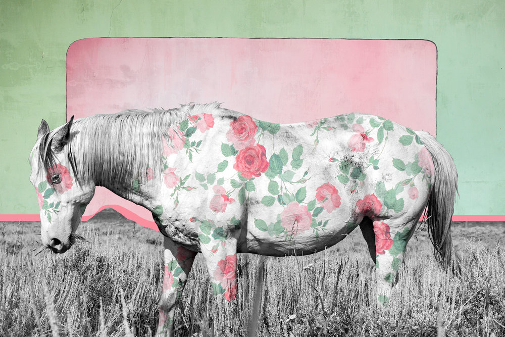 { Horse No. 21 }  I photographed this horse on a Montana ranch near Yellowstone. The floral pattern is vintage wallpaper I photographed inside the S.R. Buford Store in the National Historic Landmark of Virginia City, Montana. The S.R. Buford was built in 1874 and was the town's first brick building. The texture in the background is from plaster walls I photographed in the Hotel Meade, originally the county courthouse, built in 1875 in the ghost town of Bannack, Montana.
