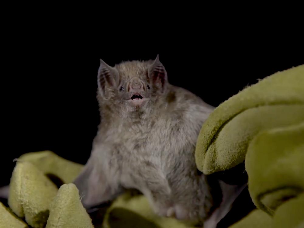 bats-1.png