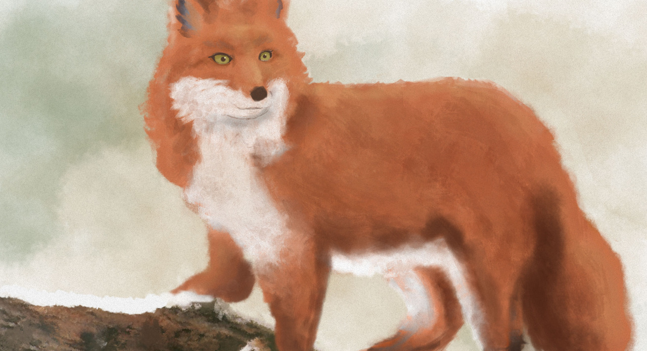I've decided I'm going to start regularly posting designs and illustrations I do, both in and out of the office, commissioned and personal. Here's a fox I ilustrated/painted in Photoshop when I should've been doing something more productive.