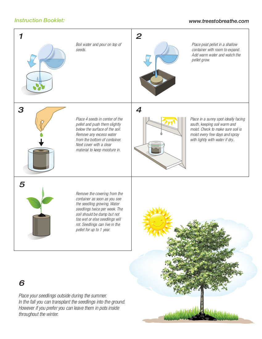 How to grow trees from seed
