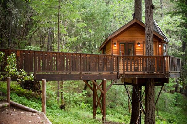 photos-luxury-tree-houses-airbnb.sw_.22.jpg