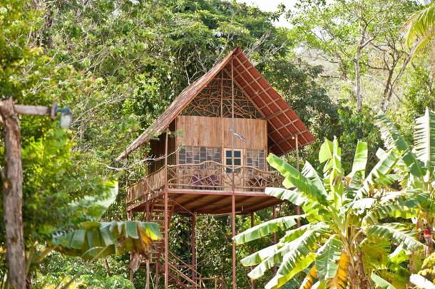photos-luxury-tree-houses-airbnb.sw_.8-1.jpg