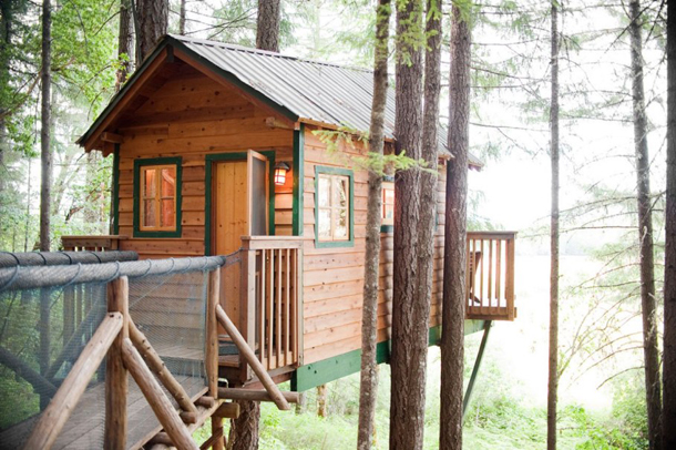 photos-luxury-tree-houses-airbnb.sw_.31.jpg