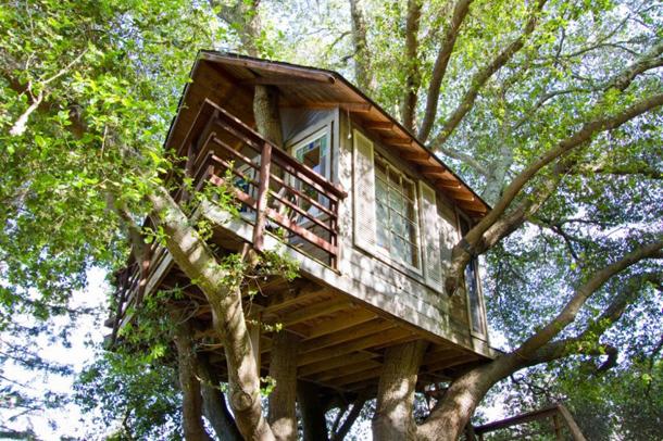 photos-luxury-tree-houses-airbnb.sw_.4.jpg