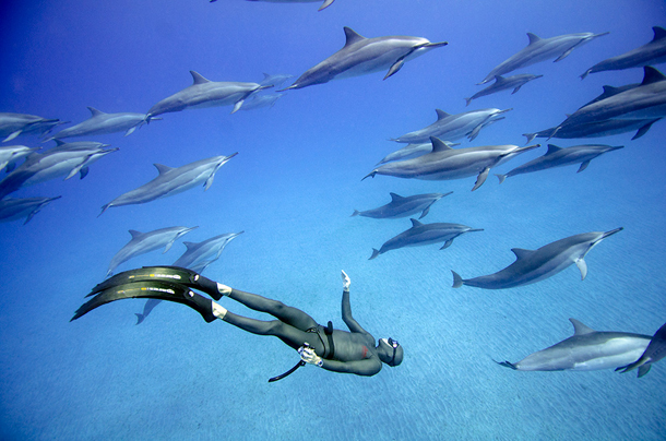 Saenz-de-Santamaria-Freediving-Hawaii-2012-08.jpg