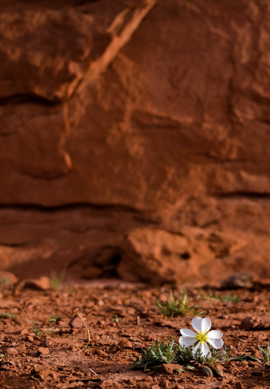 Bloming in the Rock-2.jpg