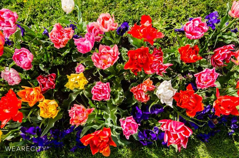 flora_botanischer_garten_eroeffnung_wearecity_koeln-2.jpg