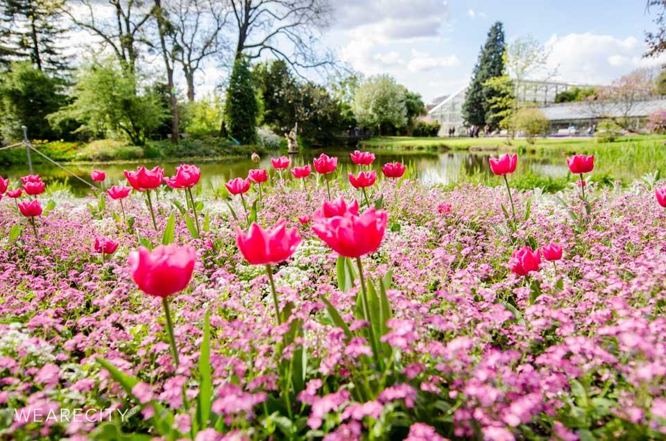 flora_botanischer_garten_eroeffnung_wearecity_koeln-3.jpg