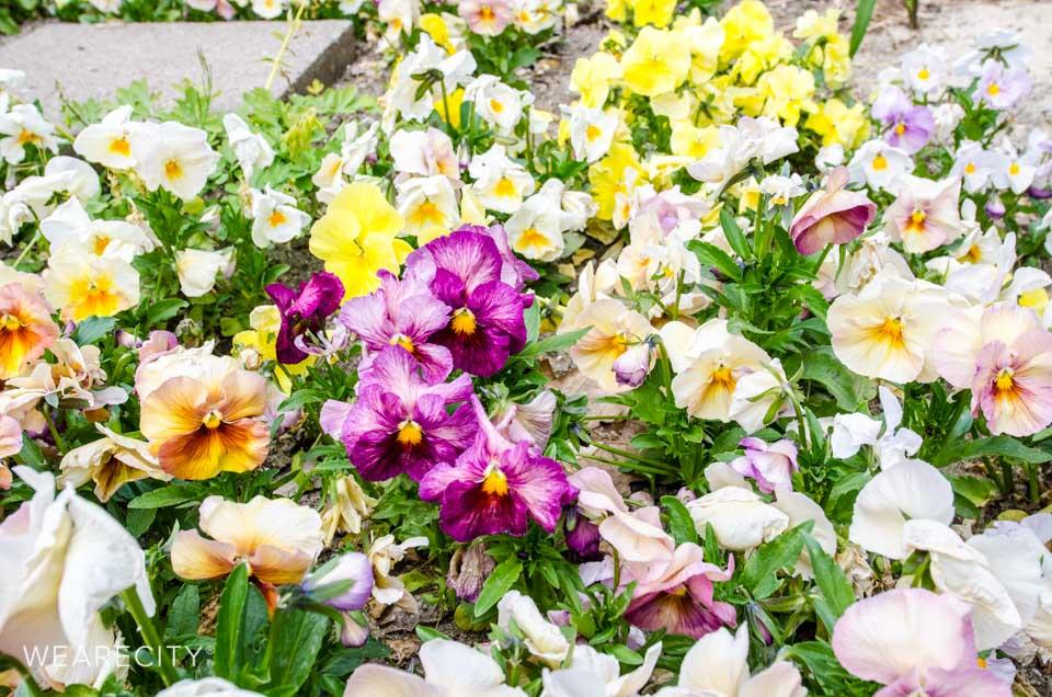 flora_botanischer_garten_eroeffnung_wearecity_koeln-5.jpg