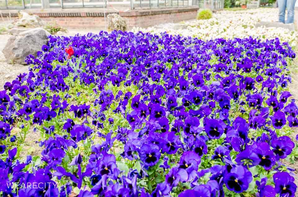 flora_botanischer_garten_eroeffnung_wearecity_koeln-4.jpg