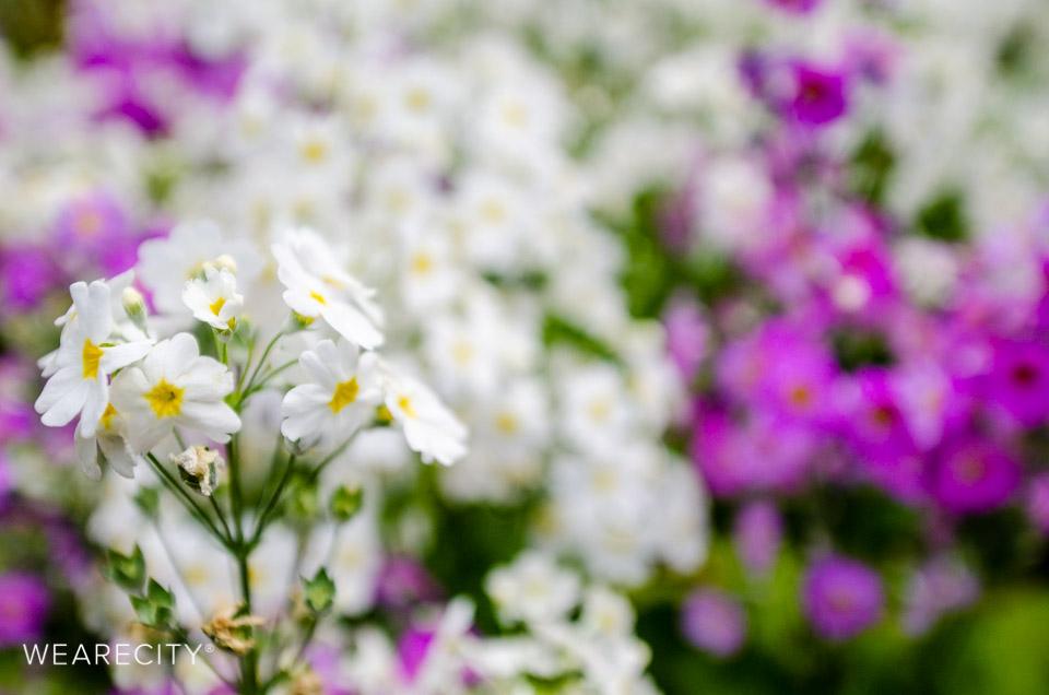 flora_botanischer_garten_eroeffnung_wearecity_koeln-6.jpg