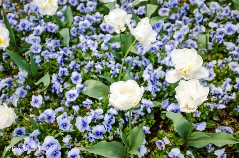 flora_botanischer_garten_eroeffnung_wearecity_koeln-7.jpg