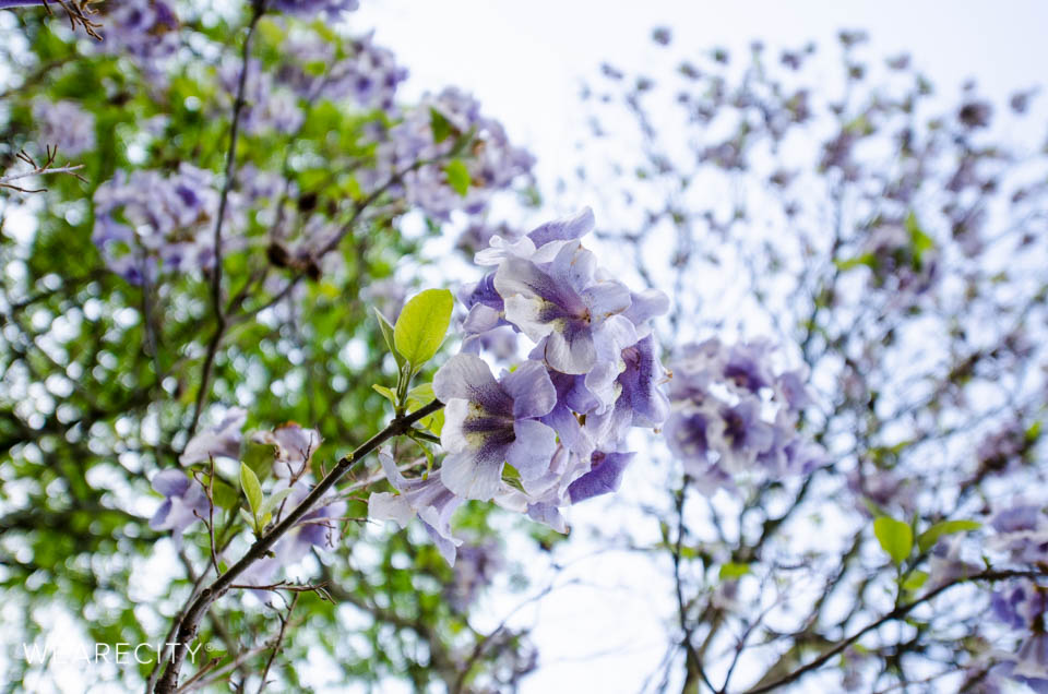 flora_botanischer_garten_eroeffnung_wearecity_koeln-9.jpg
