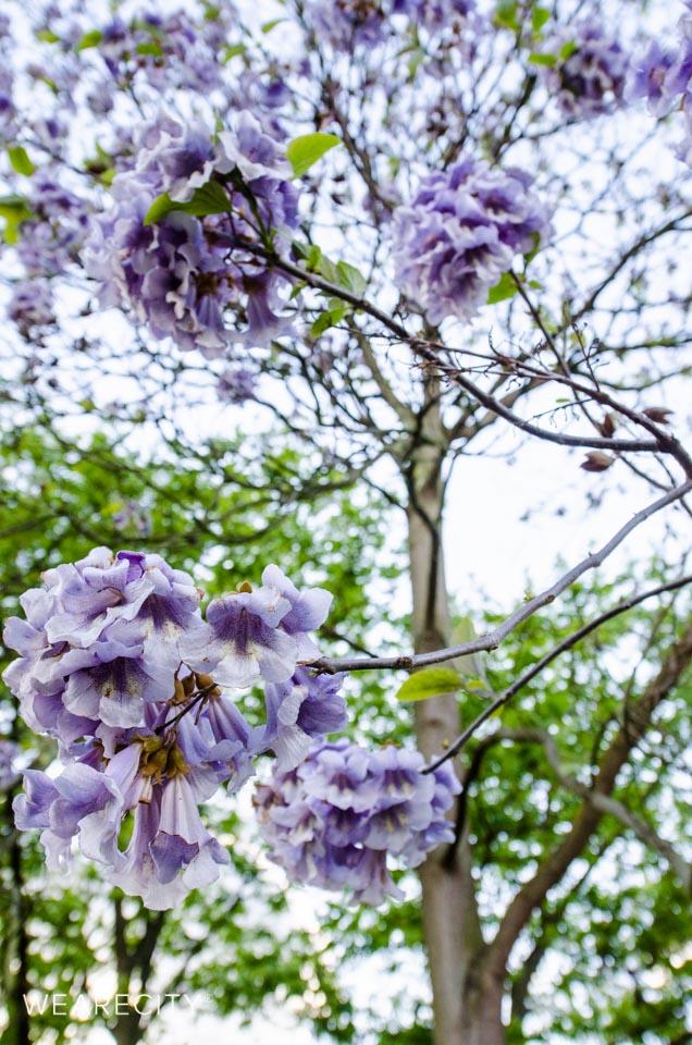 flora_botanischer_garten_eroeffnung_wearecity_koeln-8.jpg