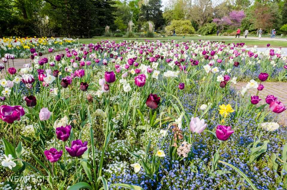 flora_botanischer_garten_eroeffnung_wearecity_koeln-11.jpg