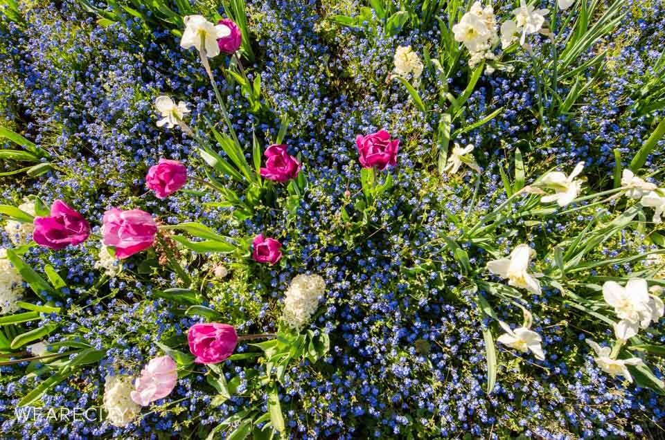 flora_botanischer_garten_eroeffnung_wearecity_koeln-13.jpg