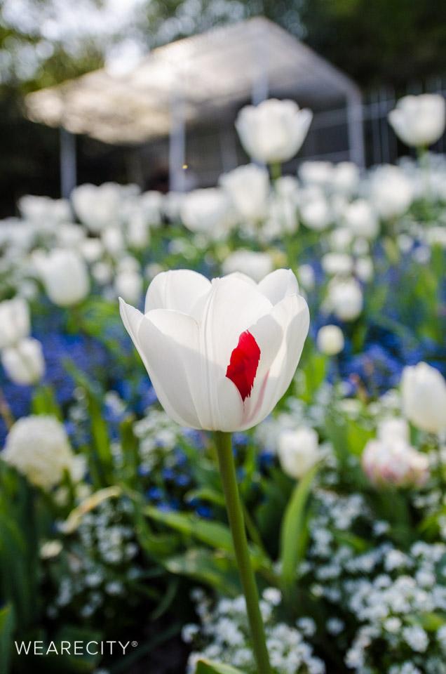 flora_botanischer_garten_eroeffnung_wearecity_koeln-14.jpg
