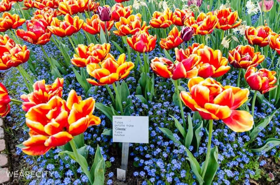 flora_botanischer_garten_eroeffnung_wearecity_koeln-15.jpg