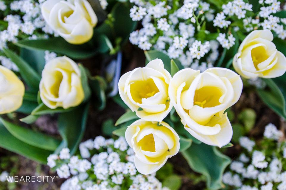 flora_botanischer_garten_eroeffnung_wearecity_koeln-17.jpg