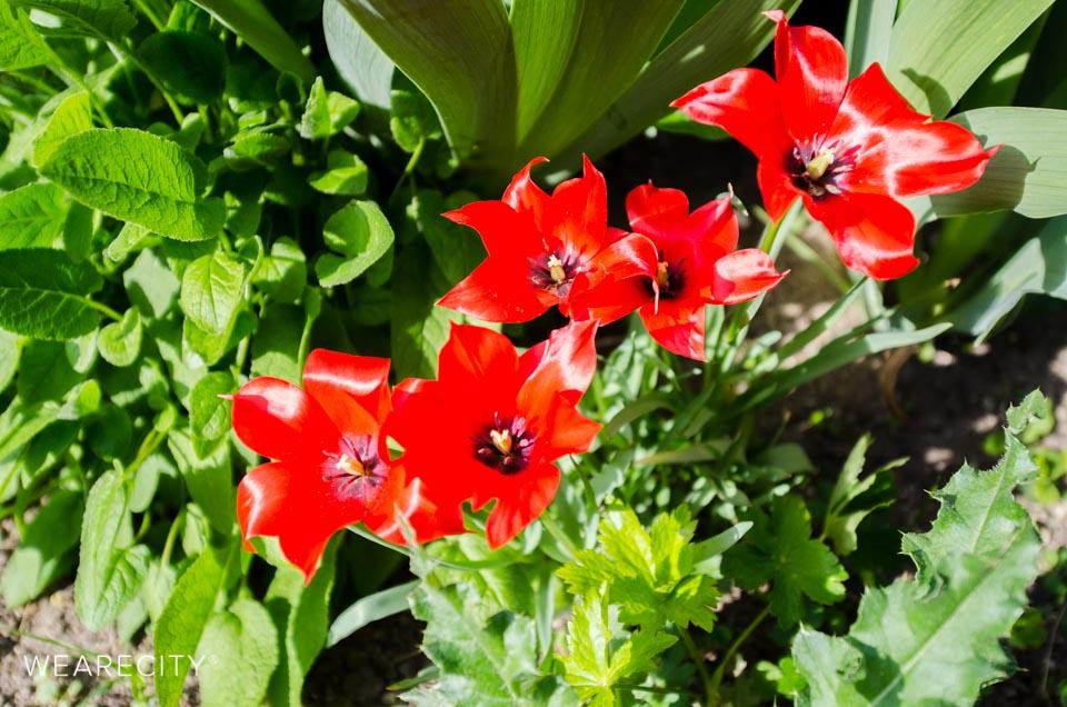 flora_botanischer_garten_eroeffnung_wearecity_koeln-18.jpg